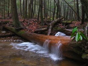 cookforestwater