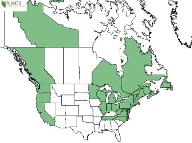 North American distribution of large cranberry